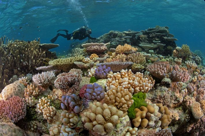 01-iucn-coral-reef