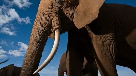 Stunning Pictures of Elephants