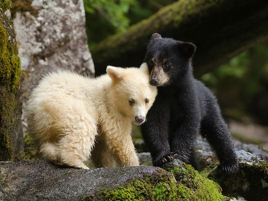 Escaped Bear Startles Pedestrians on Crowded Street - 1