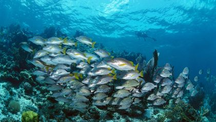 How One Country Is Restoring Its Damaged Ocean - 1