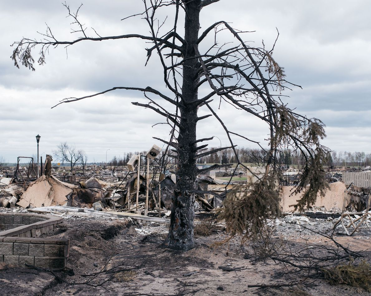 A burned tree stands in the middle of a flattened neighborhood.