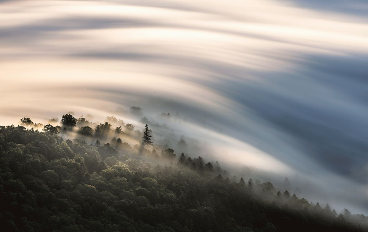 Picture of clouds over a forest in Japan