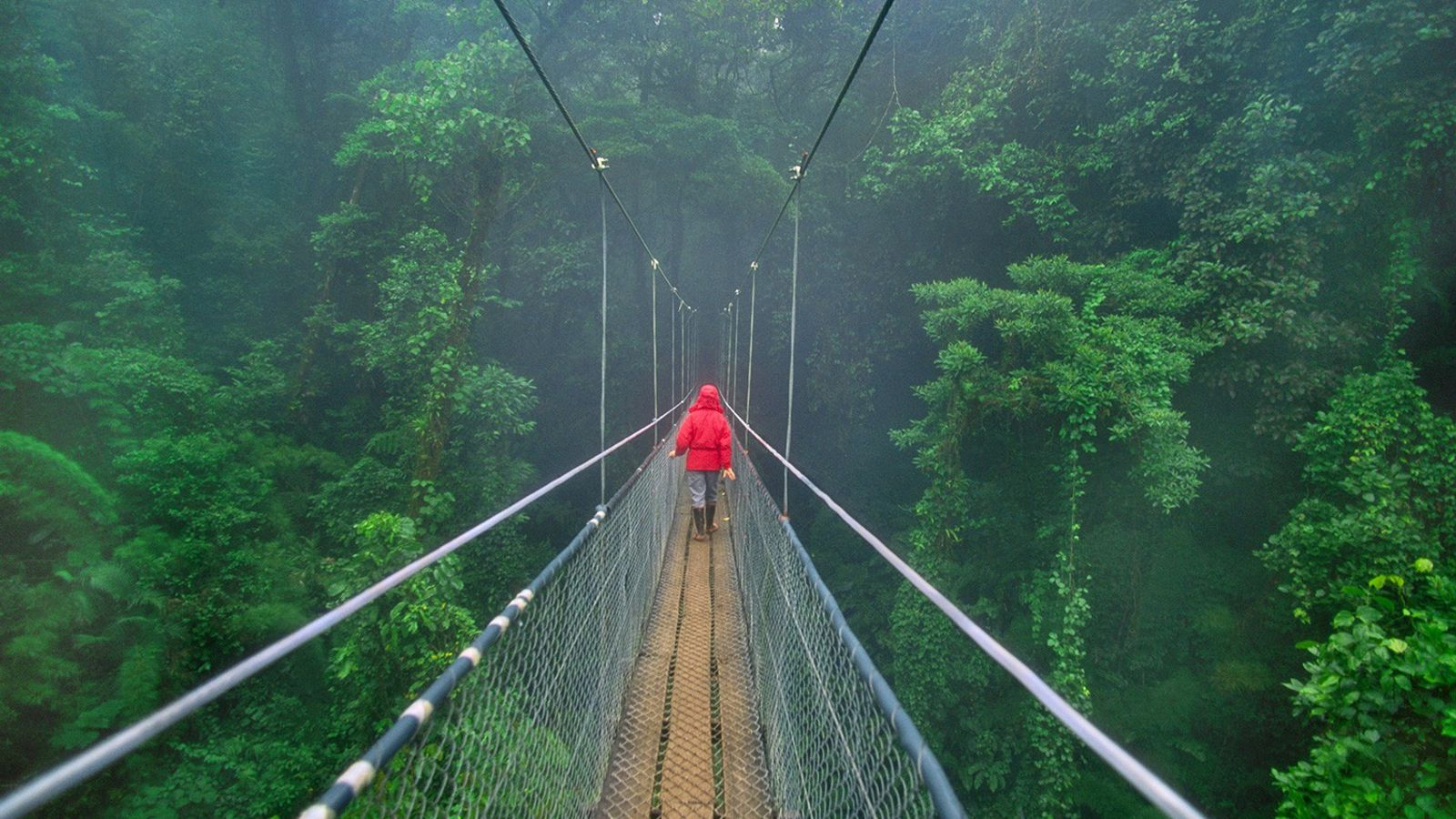 Een loopbrug door de jungle van Costa Rica.