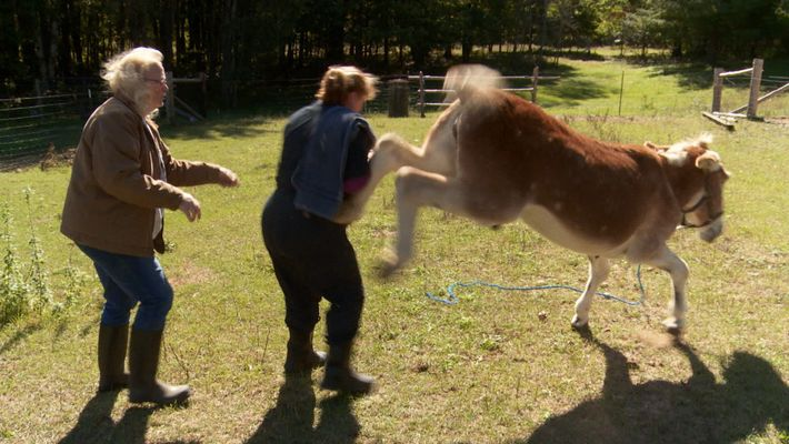 Dr. Brenda and Ray the donkey
