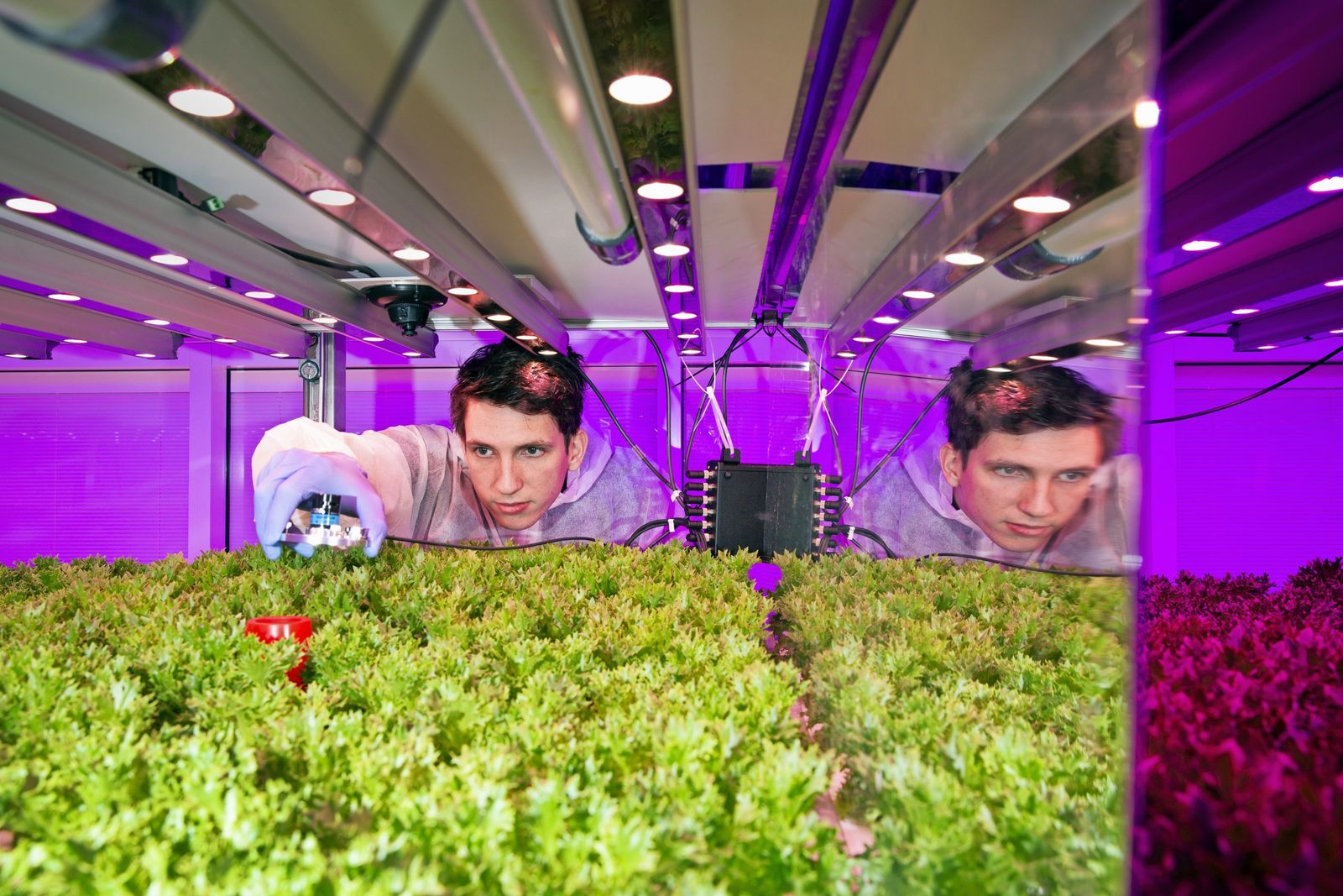 In het GrowWise Research Center op de High Tech Campus meet plantenexpert Jarno Mooren met een ...
