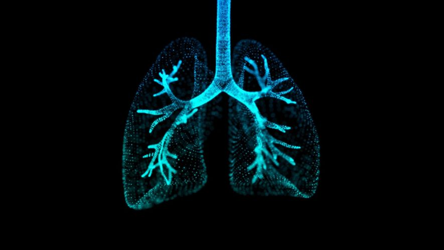 Lungs 101_NL2