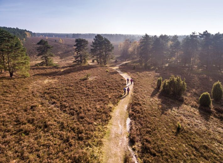 Foto: Top Trails of Germany, Heidschnuckenweg op de Misselhorner heide