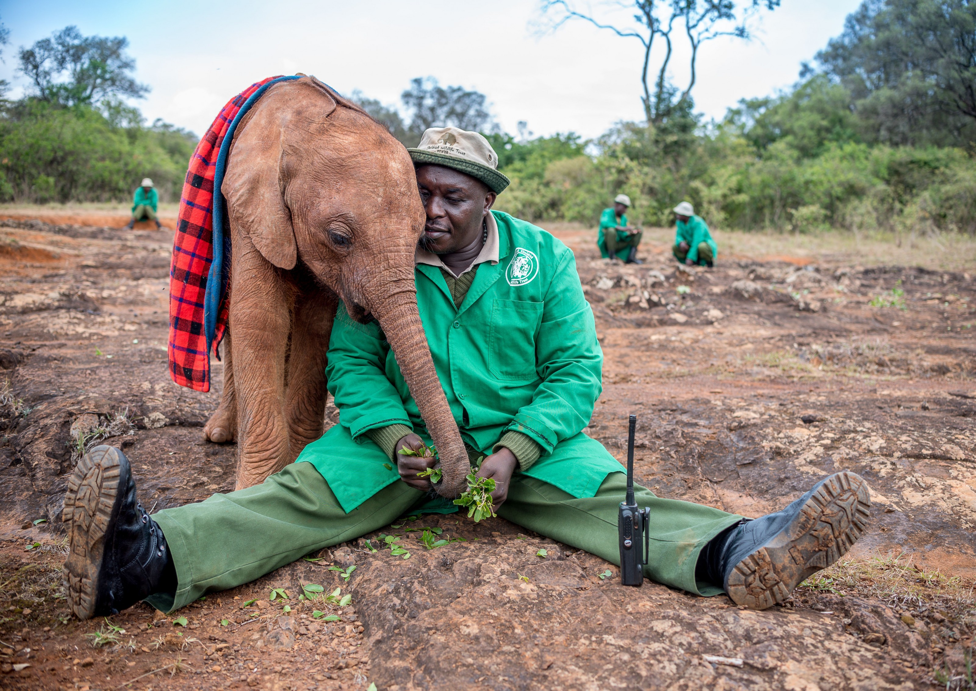 Picture of an elephant calf and a worker at a wildlife trust in Kenya