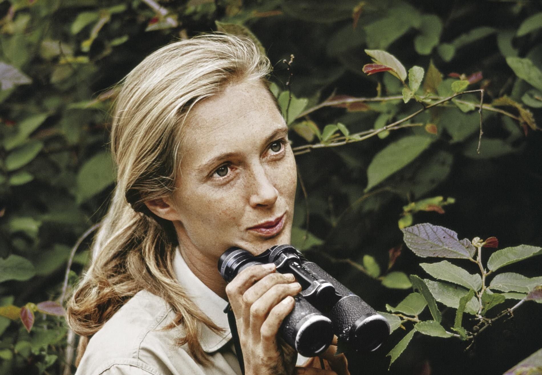 Jane Goodall in Miss Goodall and the Wild Chimpanzees (1965), de allereerste documentaire van de National ...
