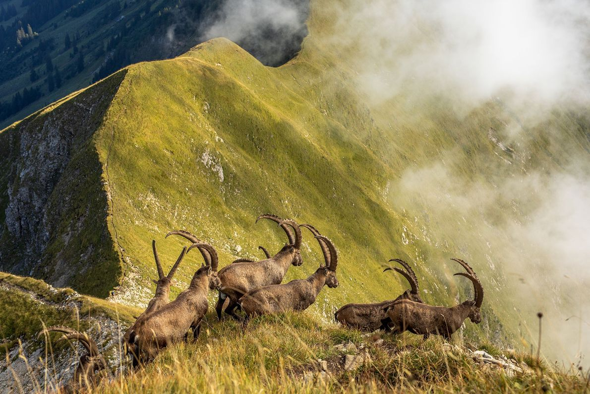 Honorable mention 2019 National Geographic Travel Photo Contest, 'Natuur'