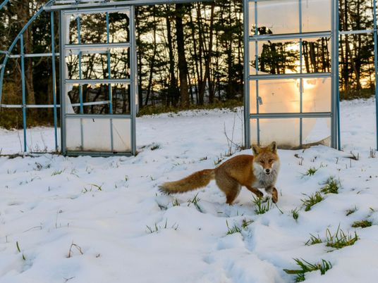 Photos: A decade after disaster, wildlife abounds in Fukushima
