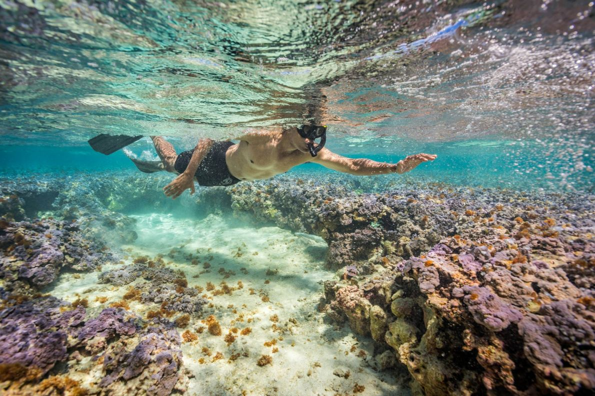 Snorkeling With Obama