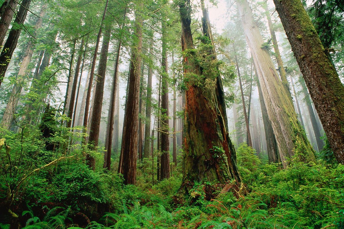Redwoods State Park, Del Norte County, California