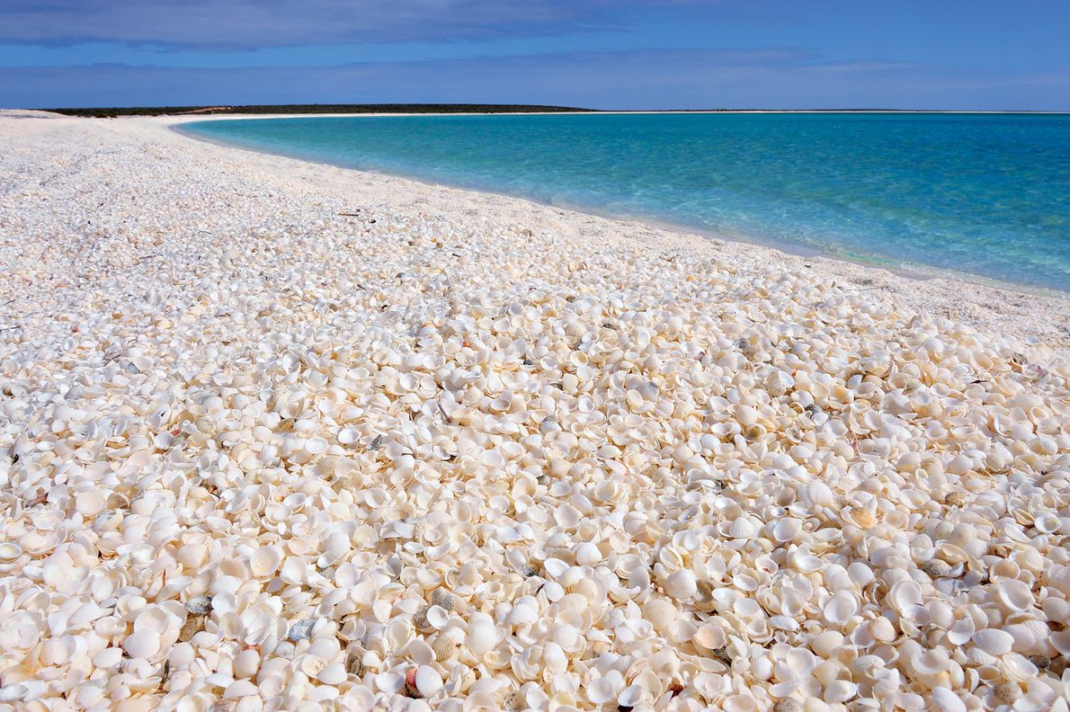 De Shell Beach in Shark Bay, West-Australië