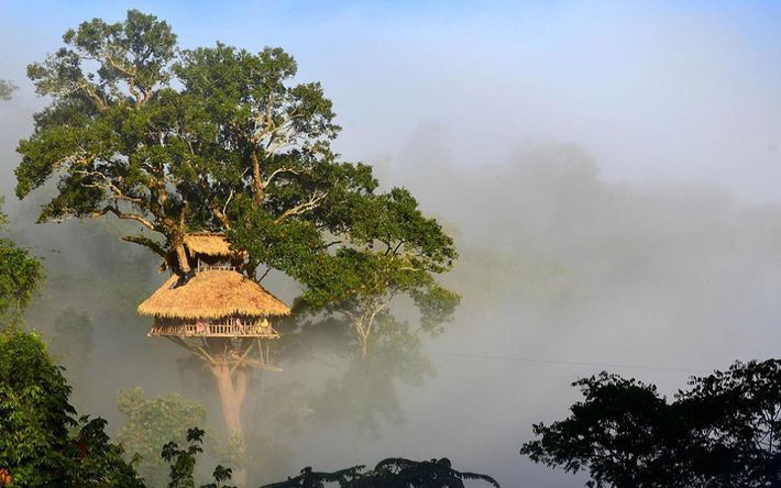 The Gibbon Experience Project in Huay Xai, Laos